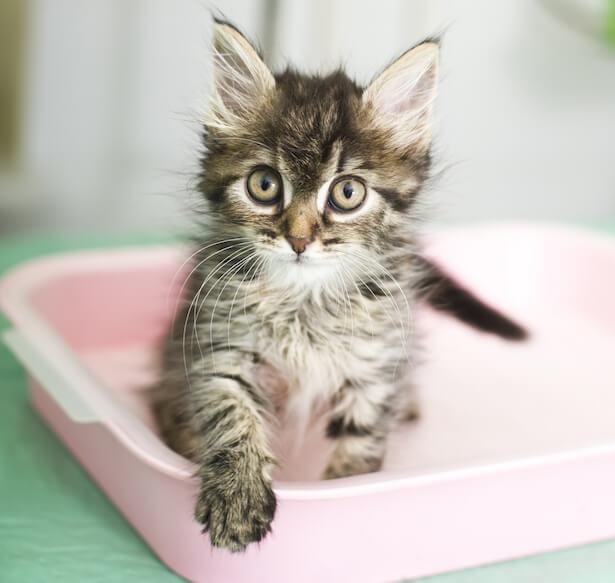 litières pour chats