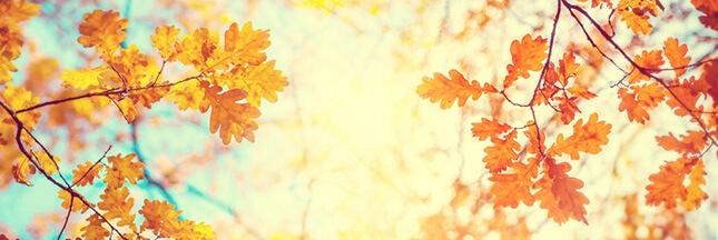 Détox d'automne : c'est le moment !