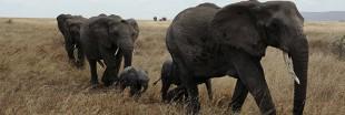 La lutte contre le commerce en ligne de faune sauvage est engagée