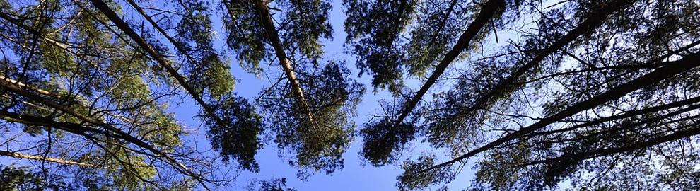 Forêts : les protéger pour nous préserver