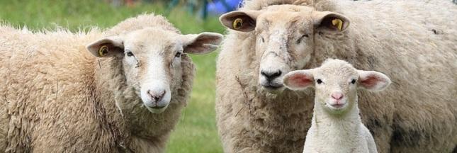 Faut-il arrêter d'acheter de la laine ?