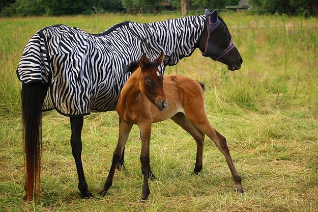 des chevaux apprennent communiquer avec les hommes. Black Bedroom Furniture Sets. Home Design Ideas