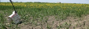 Bayer rachète Monsanto, le géant des OGM pour 59 milliards d'euros