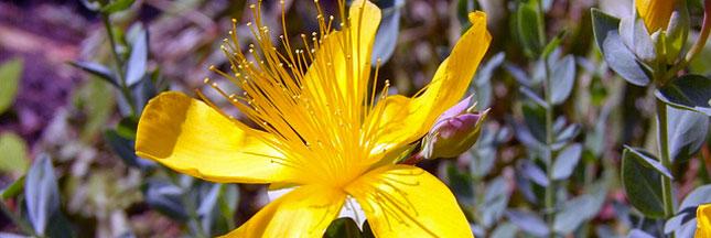 Connaissez-vous les 33 plantes alliées de votre santé ?