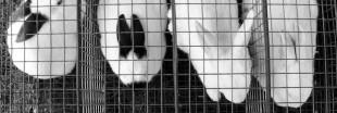 Les tests de cosmétiques sur les animaux interdits en Europe