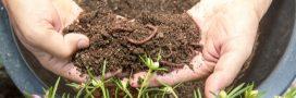 Les vers de terre, ces ouvriers qui bossent gratis