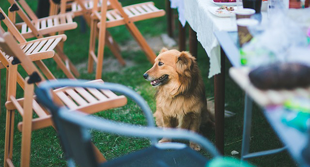 aliment, chien