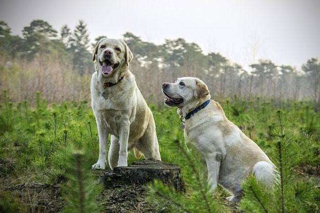 animaux-sentiments-chiens