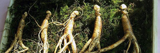 8 plantes et aliments contre la fatigue