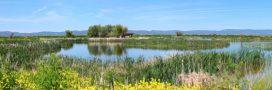 Lac Klamath: la pureté naturelle pour votre santé
