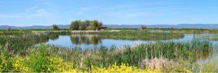Lac Klamath : la pureté naturelle pour votre santé