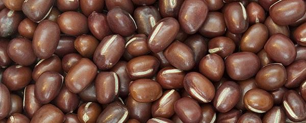 legumineuses-magnesium