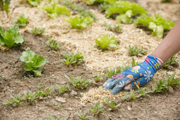 amender un sol, travailler la terre