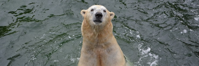 Chine : l'ours du centre commercial inquiète les ONG