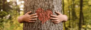 Planter un arbre ou un arbuste, une activité d'automne