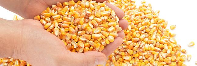 Rappel produit : maïs sans Sucres Ajoutés, Bio Village Leclerc
