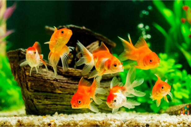 relâcher poisson