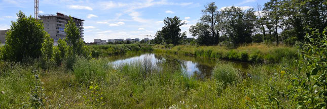 La ville de Rennes élue capitale de la biodiversité 2016
