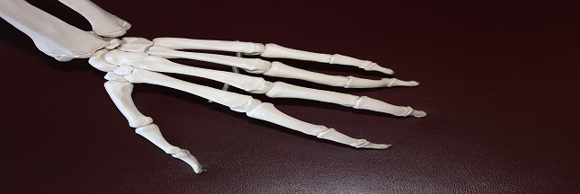 douleur articulation
