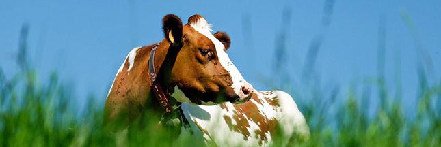 98 % des Français sont sensibles au bien-être animal