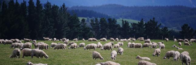 démocratie participative agriculture