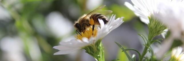 La disparition des abeilles coûterait 3 milliards d'euros