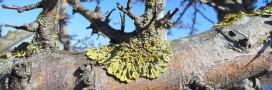 Lichens et réchauffement climatique: peuvent-ils nous aider?