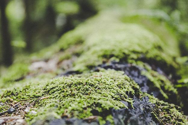 lichens-rechauffement-climatique