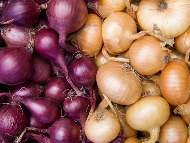 oignons, légumes de saison en novembre