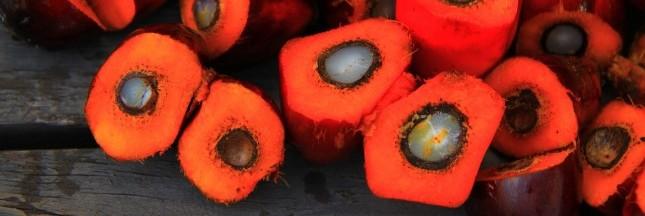 Le premier consommateur d'huile de palme d'Europe? Le Diesel