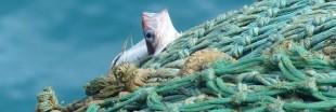 Une baisse des quotas pour la pêche en eau profonde