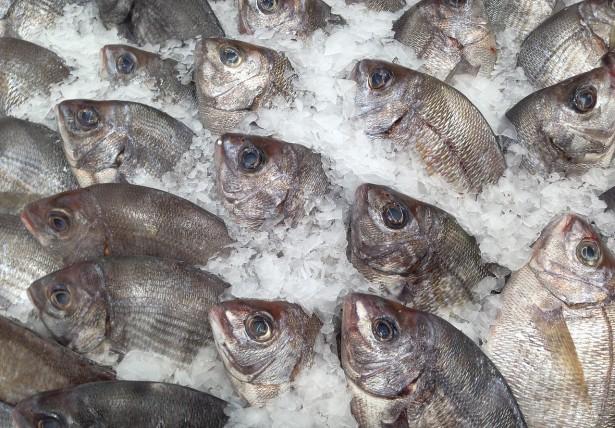pêche en eaux profondes, poissons, dorades, ressources halieutiques