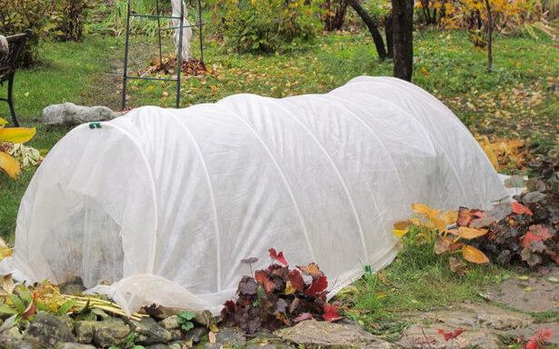 protéger jardin hiver