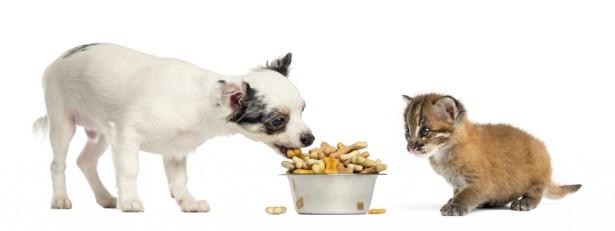 nourriture pour animaux, aliments bio, chien, chat