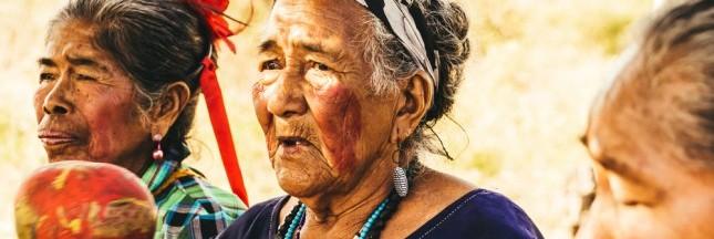 La stévia: un savoir volé aux tribus Guaranis?