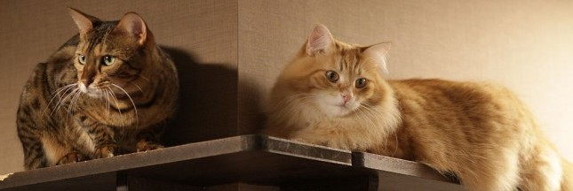 Bar à chats, à chouettes ou à serpents: la folie des cafés animaliers au Japon