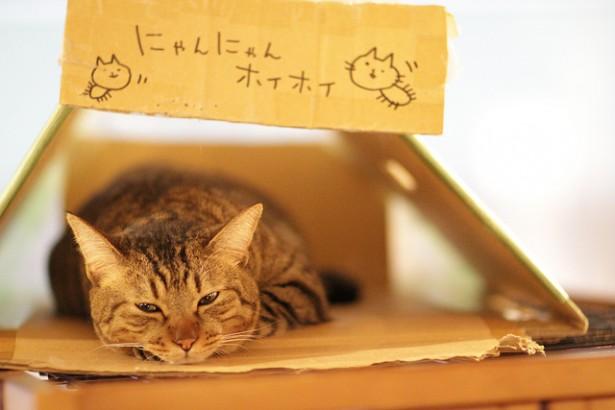 bar à chats, chat mignon