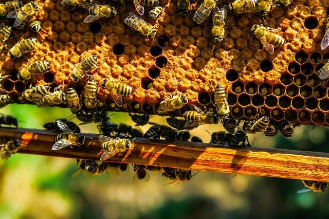 abeilles ruche livre