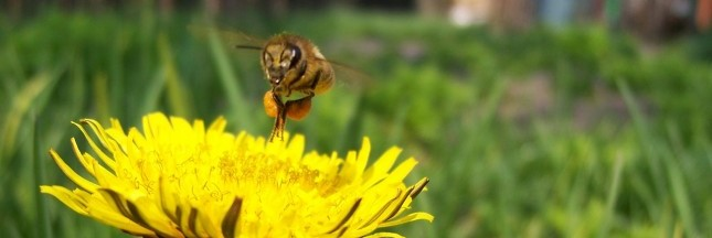 Lot-et-Garonne: la perte de pollinisateurs se fait sentir