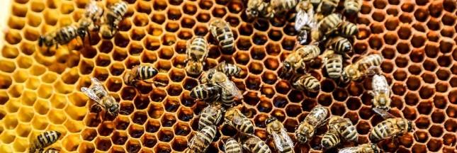 Danse avec les abeilles, la pharmacie de la ruche : le livre