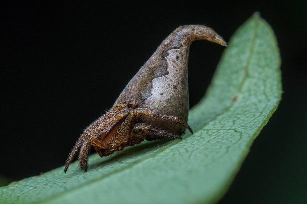 araignee gryffondor