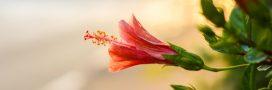 Calendrier des plantes d'intérieur: que faire en décembre?