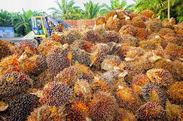 huile-palme-enfants-travail
