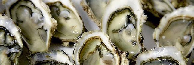 Les voleurs d'huîtres ont de mauvais jours devant eux