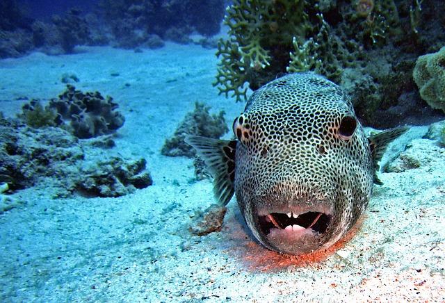 sable poisson
