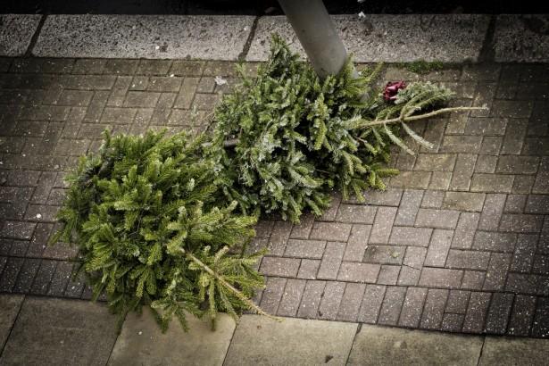 après Noël, déchets de Noël, sapin de Noël