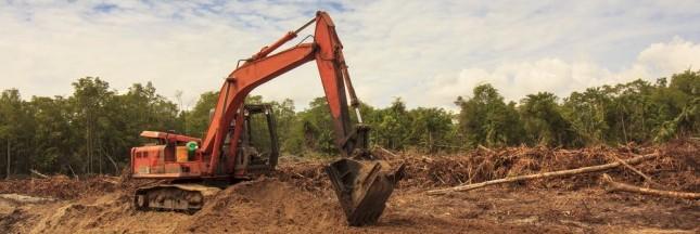 La déforestation provoque l'augmentation des maladies infectieuses