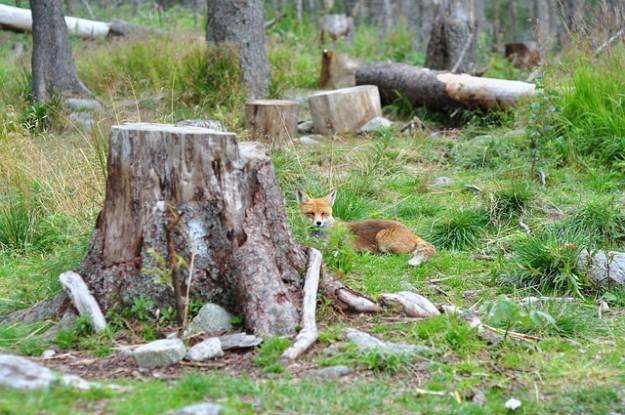 agence française de biodiversité, renard