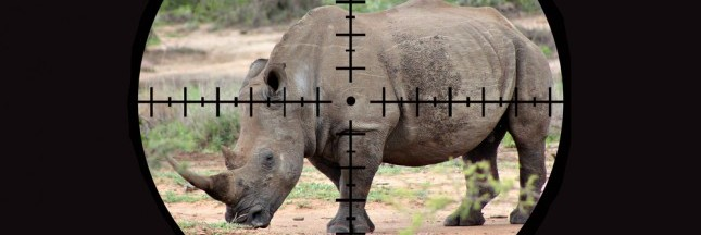 Interpol s'attaque aux trafics d'animaux sauvages
