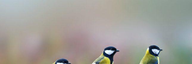 comptage oiseaux, jardin